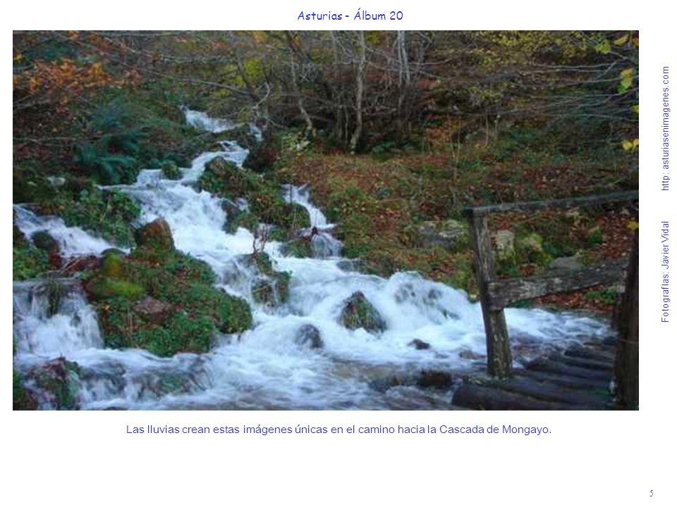 5 Asturias - Álbum 20 Fotografías: Javier Vidal http: asturiasenimagenes.com Las lluvias crean estas imágenes únicas en el camino hacia la Cascada de