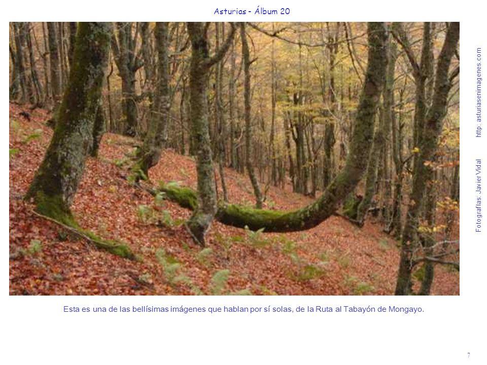 8 Asturias - Álbum 20 Fotografías: Javier Vidal http: asturiasenimagenes.com El camino por este bosque encantado les hará flotar de emoción, en la Ruta a la Cascada de Mongayo.