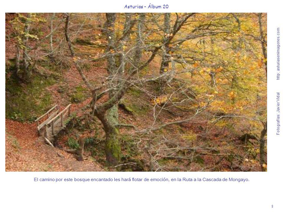 8 Asturias - Álbum 20 Fotografías: Javier Vidal http: asturiasenimagenes.com El camino por este bosque encantado les hará flotar de emoción, en la Rut