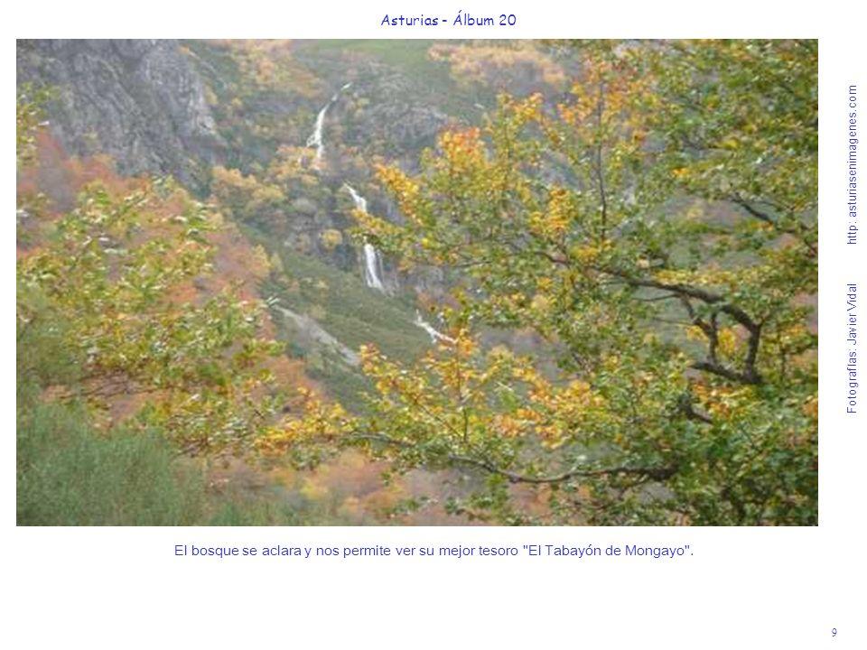 10 Asturias - Álbum 20 Fotografías: Javier Vidal http: asturiasenimagenes.com Hemos llegado al Punto G del placer natural del Tabayón de Mongayo.