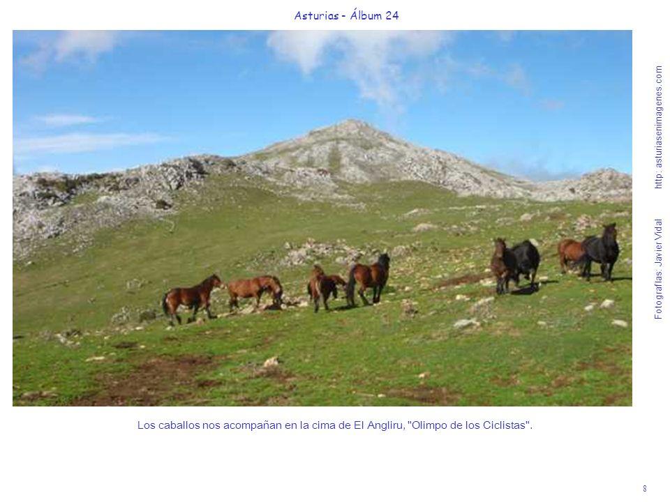 8 Asturias - Álbum 24 Fotografías: Javier Vidal http: asturiasenimagenes.com Los caballos nos acompañan en la cima de El Angliru,