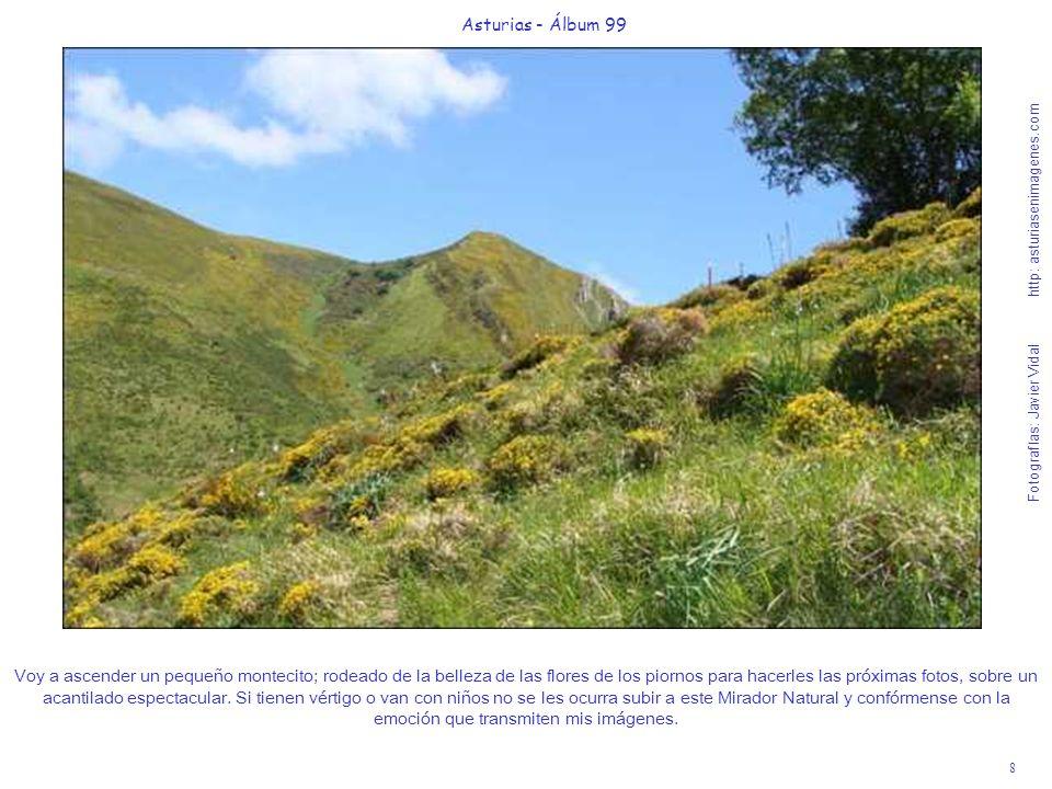 8 Asturias - Álbum 99 Fotografías: Javier Vidal http: asturiasenimagenes.com Voy a ascender un pequeño montecito; rodeado de la belleza de las flores