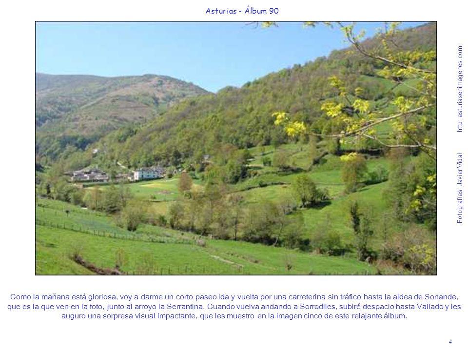 4 Asturias - Álbum 90 Fotografías: Javier Vidal http: asturiasenimagenes.com Como la mañana está gloriosa, voy a darme un corto paseo ida y vuelta por