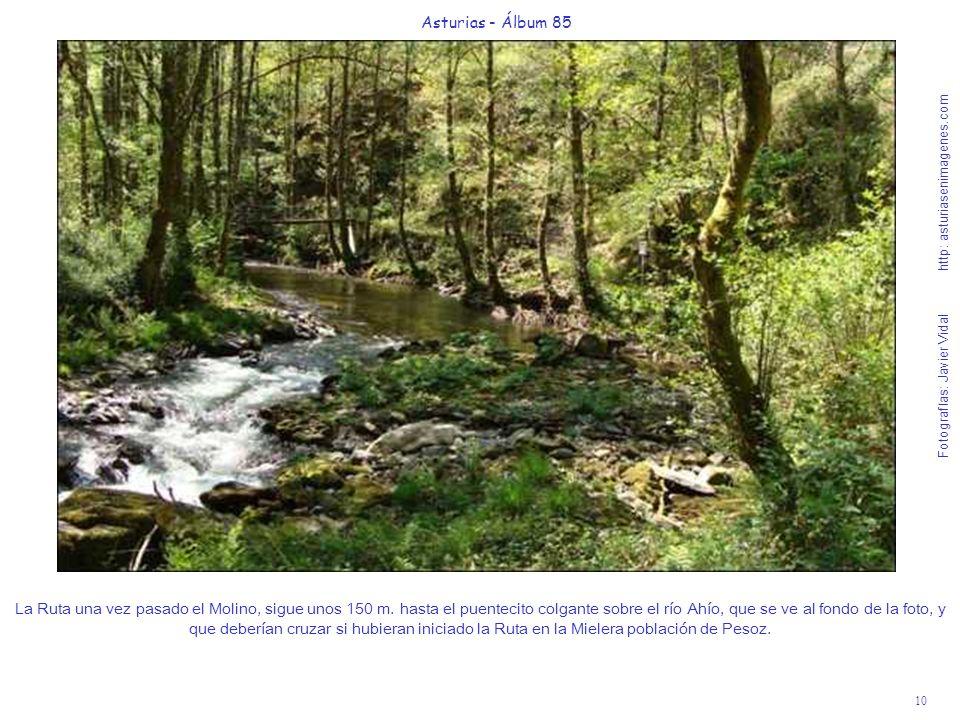10 Asturias - Álbum 85 Fotografías: Javier Vidal http: asturiasenimagenes.com La Ruta una vez pasado el Molino, sigue unos 150 m. hasta el puentecito