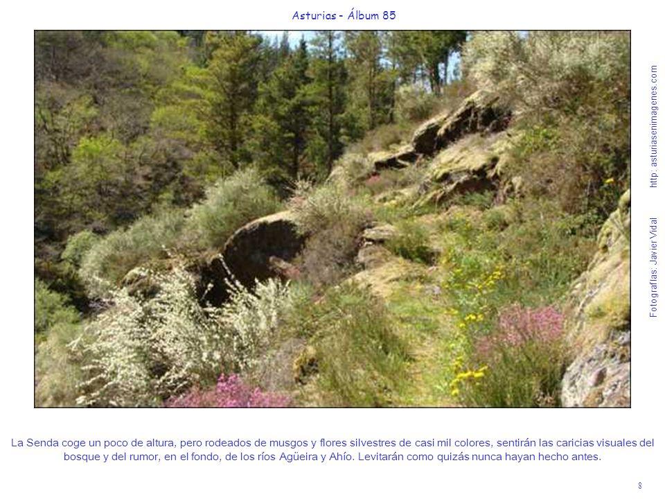 8 Asturias - Álbum 85 Fotografías: Javier Vidal http: asturiasenimagenes.com La Senda coge un poco de altura, pero rodeados de musgos y flores silvest