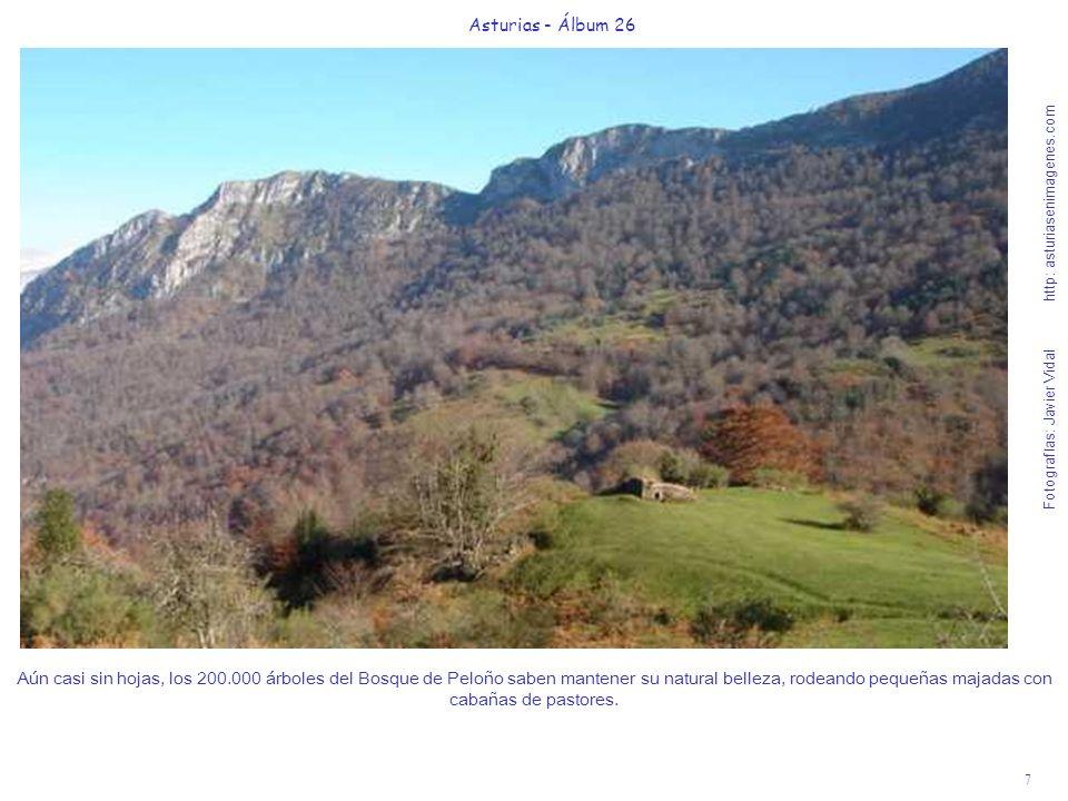 8 Asturias - Álbum 26 Fotografías: Javier Vidal http: asturiasenimagenes.com Entre los acebos del camino, rodeados de pequeñas cascadas (que hacen recomendable llevar zapatos protegidos del agua y bastón de apoyo), vemos al fondo la Majada de La Collada de Granceno, de 1195 m.Final de la suave ruta de 80 .