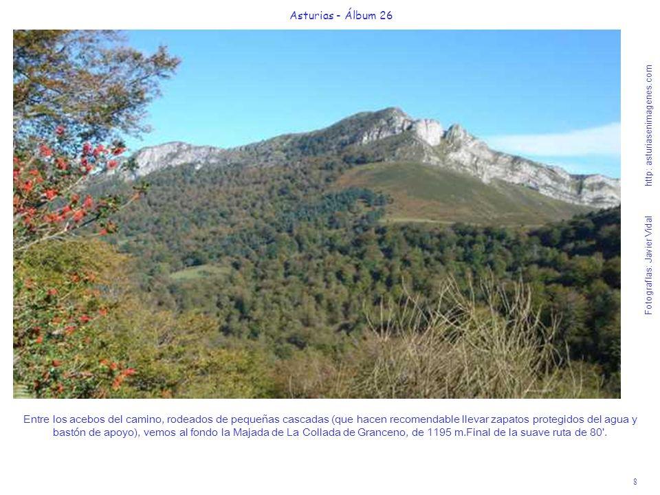 8 Asturias - Álbum 26 Fotografías: Javier Vidal http: asturiasenimagenes.com Entre los acebos del camino, rodeados de pequeñas cascadas (que hacen rec