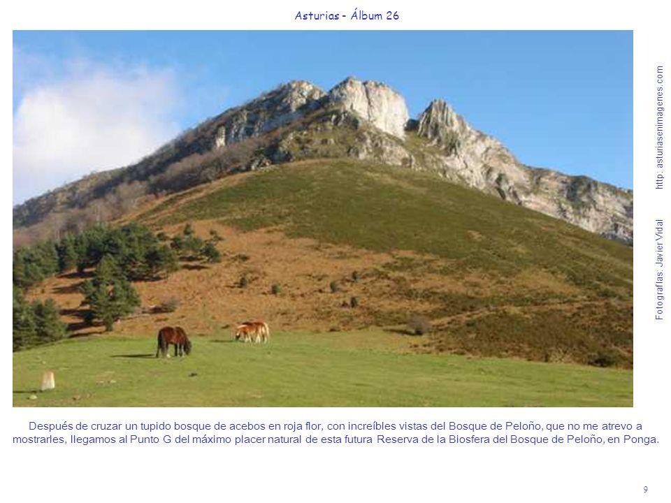 9 Asturias - Álbum 26 Fotografías: Javier Vidal http: asturiasenimagenes.com Después de cruzar un tupido bosque de acebos en roja flor, con increíbles