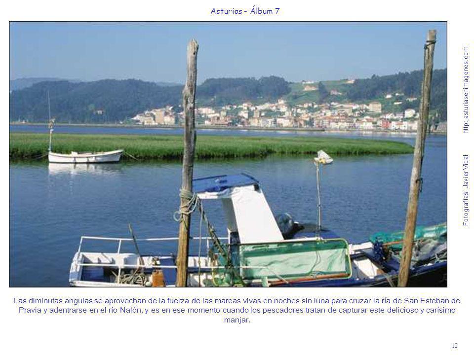 12 Asturias - Álbum 7 Fotografías: Javier Vidal http: asturiasenimagenes.com Las diminutas angulas se aprovechan de la fuerza de las mareas vivas en n