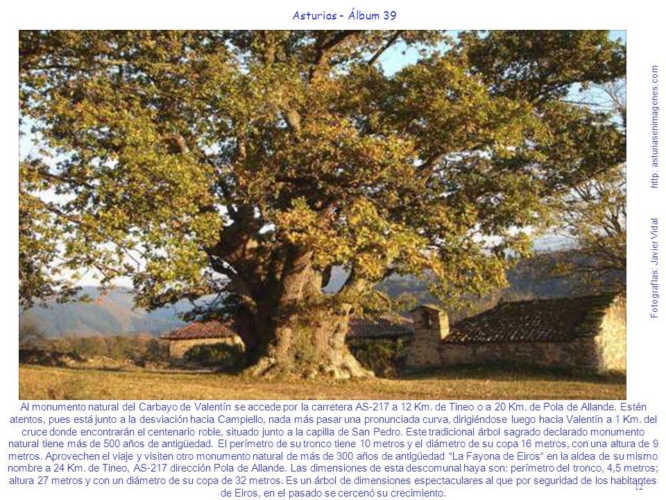 12 Asturias - Álbum 39 Fotografías: Javier Vidal http: asturiasenimagenes.com Al monumento natural del Carbayo de Valentín se accede por la carretera