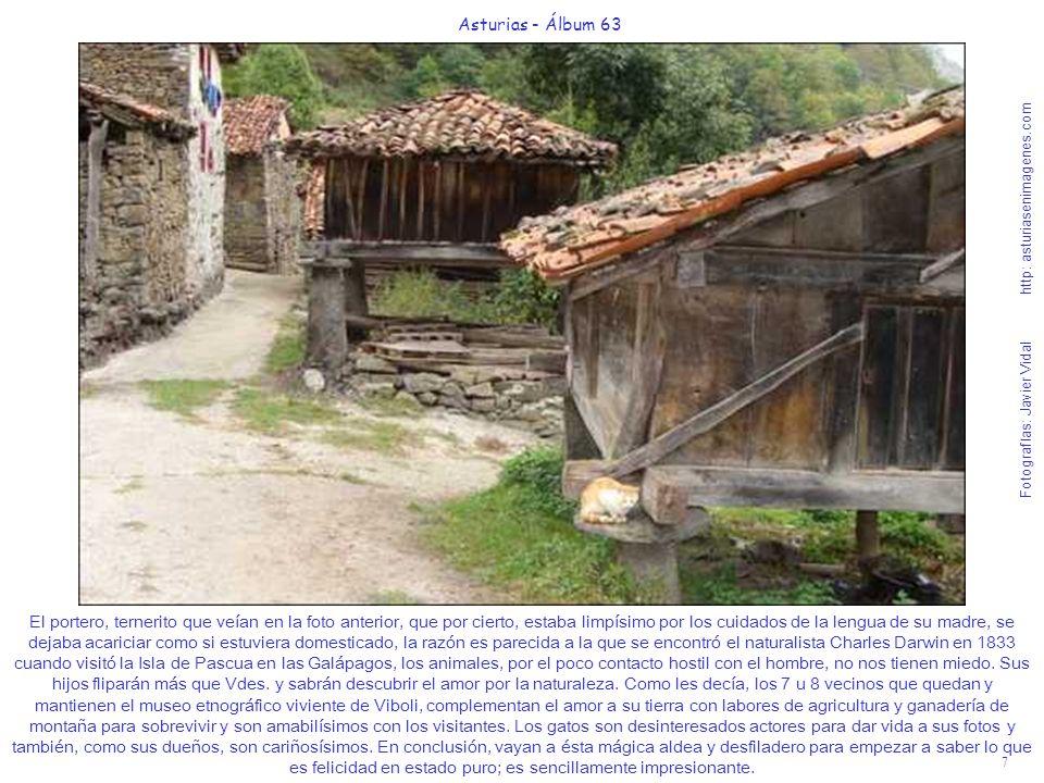 7 Asturias - Álbum 63 Fotografías: Javier Vidal http: asturiasenimagenes.com El portero, ternerito que veían en la foto anterior, que por cierto, esta