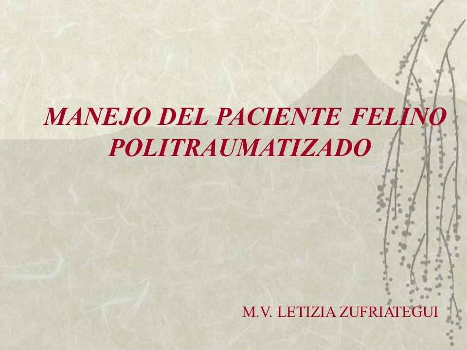 MANEJO DEL PACIENTE FELINO POLITRAUMATIZADO M.V. LETIZIA ZUFRIATEGUI