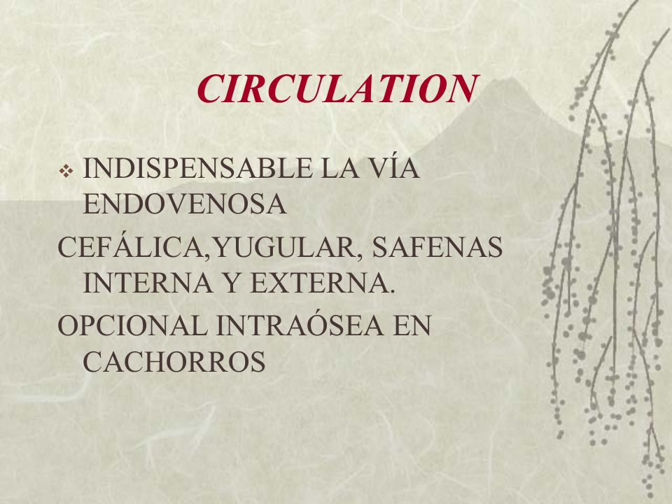 CIRCULATION INDISPENSABLE LA VÍA ENDOVENOSA CEFÁLICA,YUGULAR, SAFENAS INTERNA Y EXTERNA. OPCIONAL INTRAÓSEA EN CACHORROS