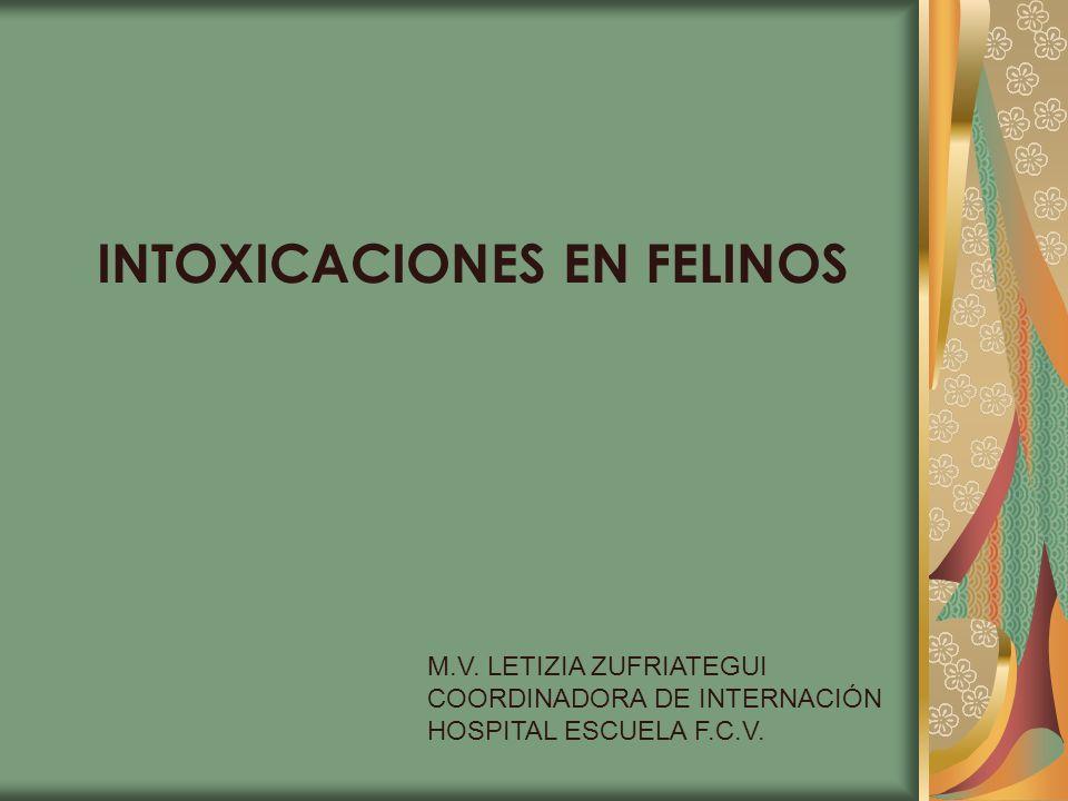 INTOXICACIONES EN FELINOS M.V. LETIZIA ZUFRIATEGUI COORDINADORA DE INTERNACIÓN HOSPITAL ESCUELA F.C.V.