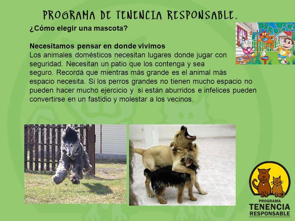 ¿Cómo elegir una mascota? Necesitamos pensar en donde vivimos Los animales domésticos necesitan lugares donde jugar con seguridad. Necesitan un patio