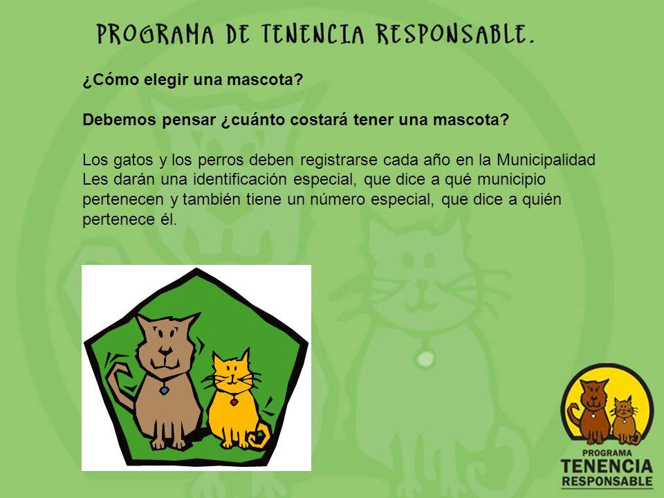 ¿Cómo elegir una mascota? Debemos pensar ¿cuánto costará tener una mascota? Los gatos y los perros deben registrarse cada año en la Municipalidad Les