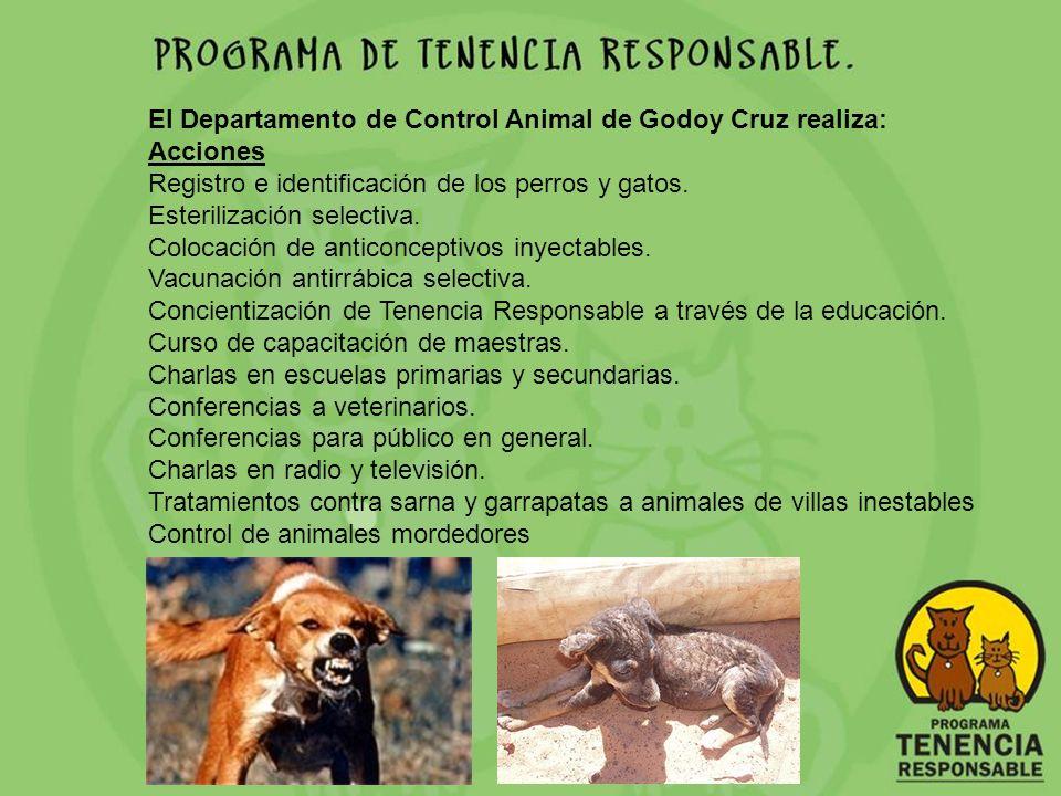 El Departamento de Control Animal de Godoy Cruz realiza: Acciones Registro e identificación de los perros y gatos. Esterilización selectiva. Colocació