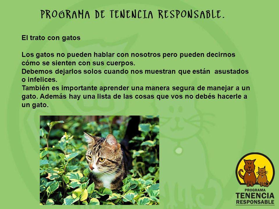 El trato con gatos ¿Cómo nos dice un gato que se siente feliz y relajado.