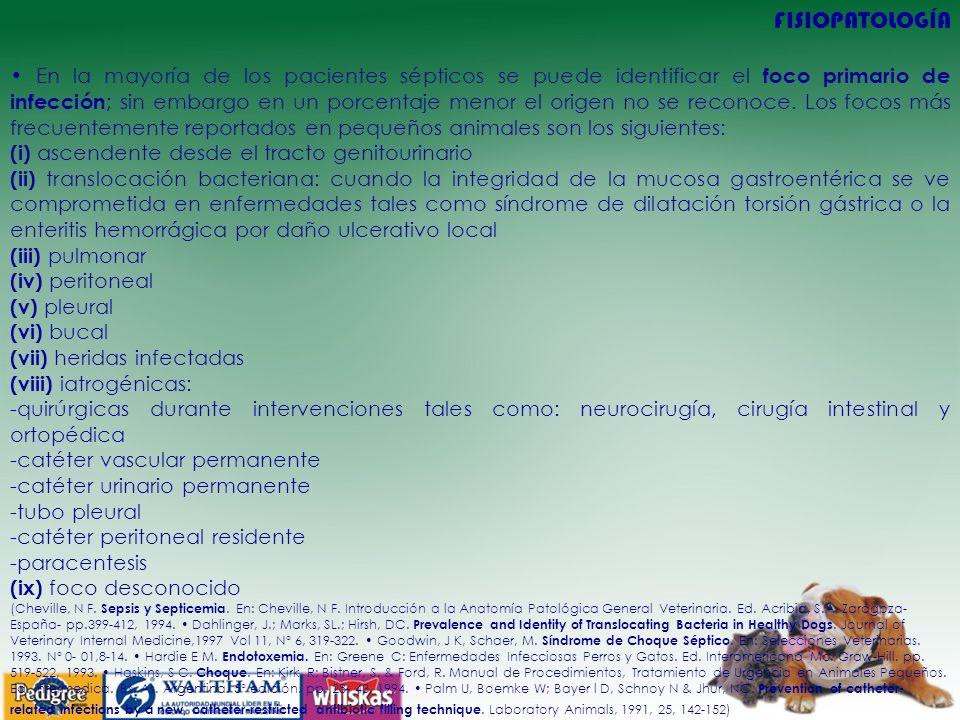 FISIOPATOLOGÍA En la mayoría de los pacientes sépticos se puede identificar el foco primario de infección ; sin embargo en un porcentaje menor el origen no se reconoce.