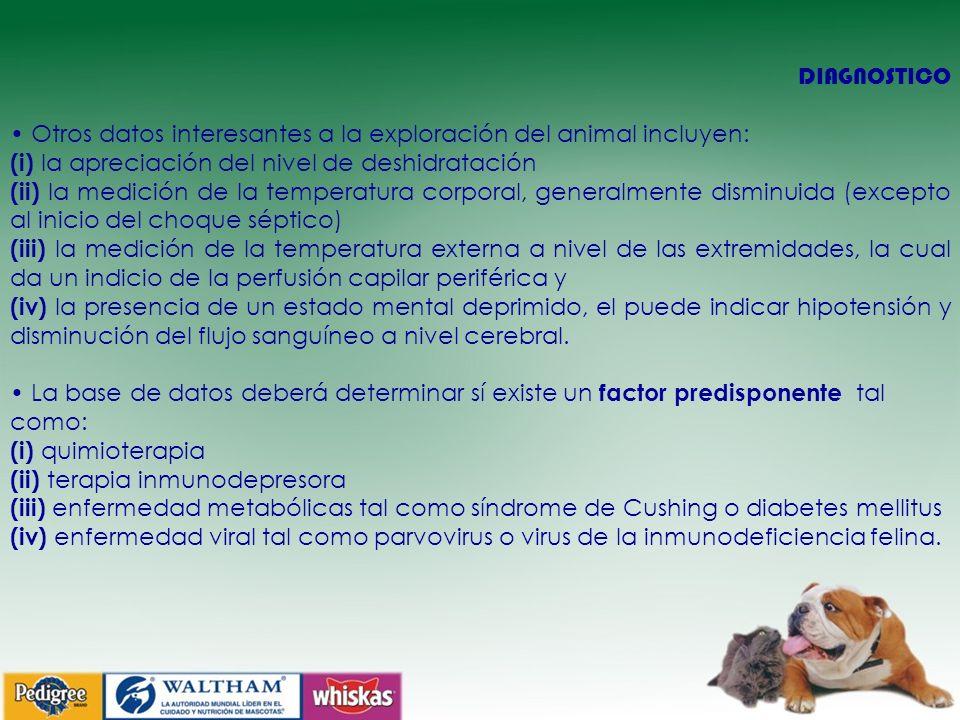 DIAGNOSTICO Otros datos interesantes a la exploración del animal incluyen: (i) la apreciación del nivel de deshidratación (ii) la medición de la temperatura corporal, generalmente disminuida (excepto al inicio del choque séptico) (iii) la medición de la temperatura externa a nivel de las extremidades, la cual da un indicio de la perfusión capilar periférica y (iv) la presencia de un estado mental deprimido, el puede indicar hipotensión y disminución del flujo sanguíneo a nivel cerebral.