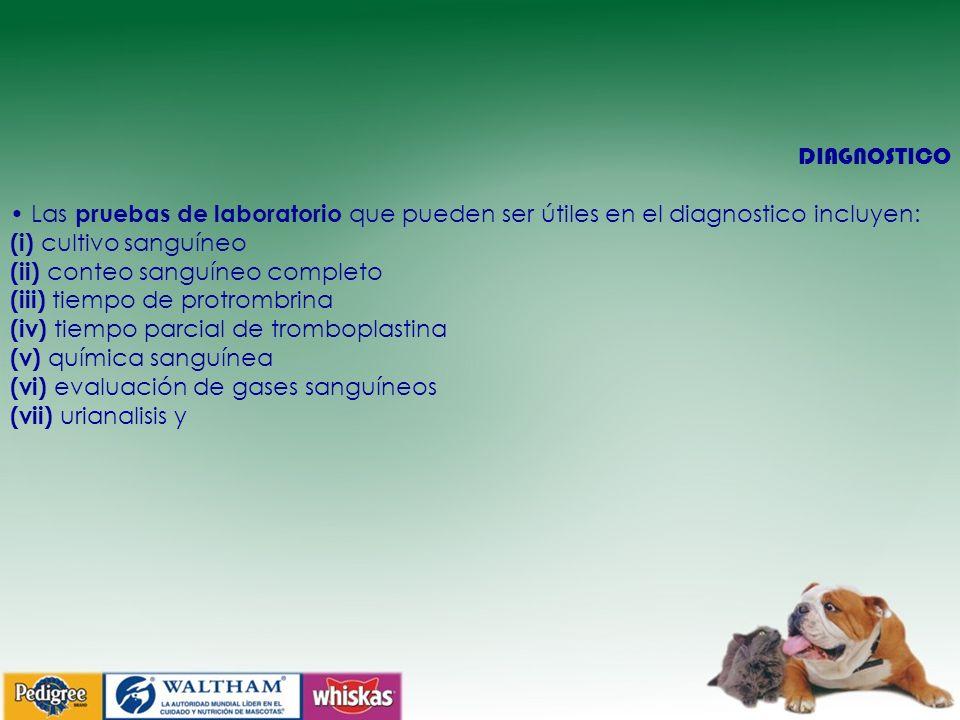 DIAGNOSTICO Las pruebas de laboratorio que pueden ser útiles en el diagnostico incluyen: (i) cultivo sanguíneo (ii) conteo sanguíneo completo (iii) ti