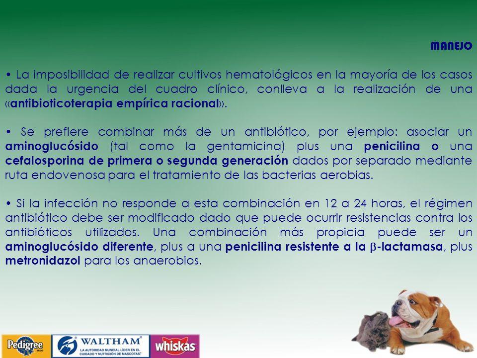 MANEJO La imposibilidad de realizar cultivos hematológicos en la mayoría de los casos dada la urgencia del cuadro clínico, conlleva a la realización de una « antibioticoterapia empírica racional ».