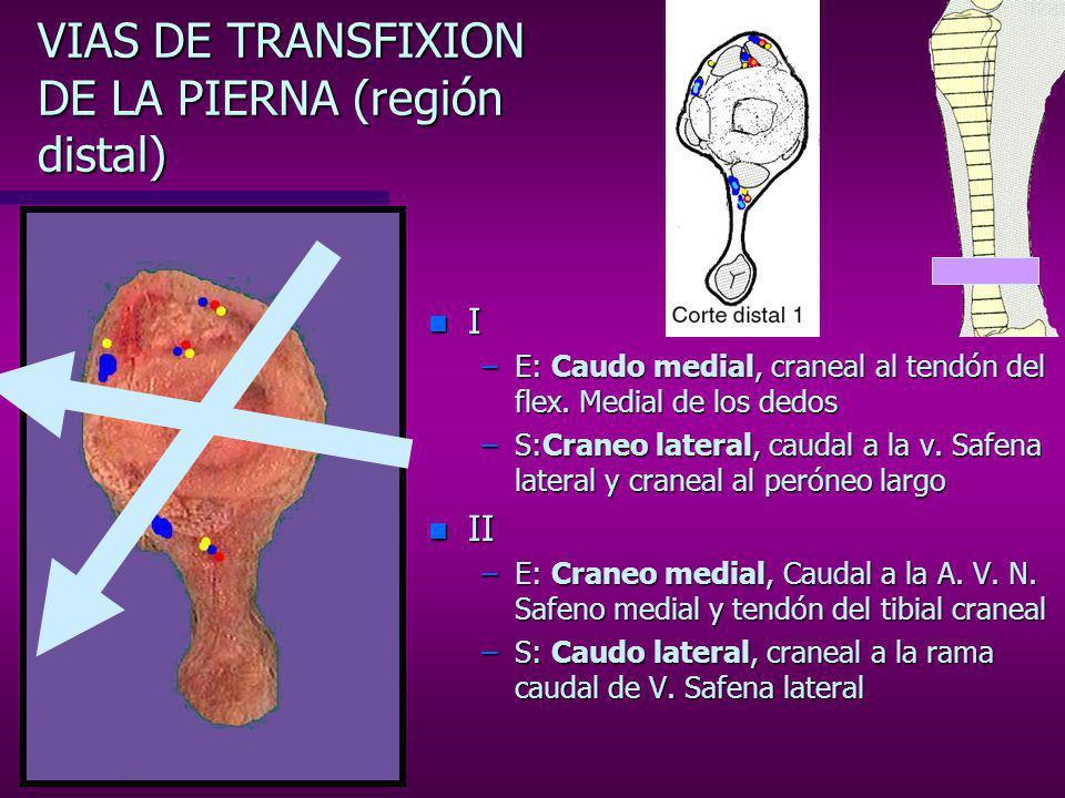 VIAS DE TRANSFIXION DE LA PIERNA (región distal) n I –E: Cara medial, craneal al tendón del flex.