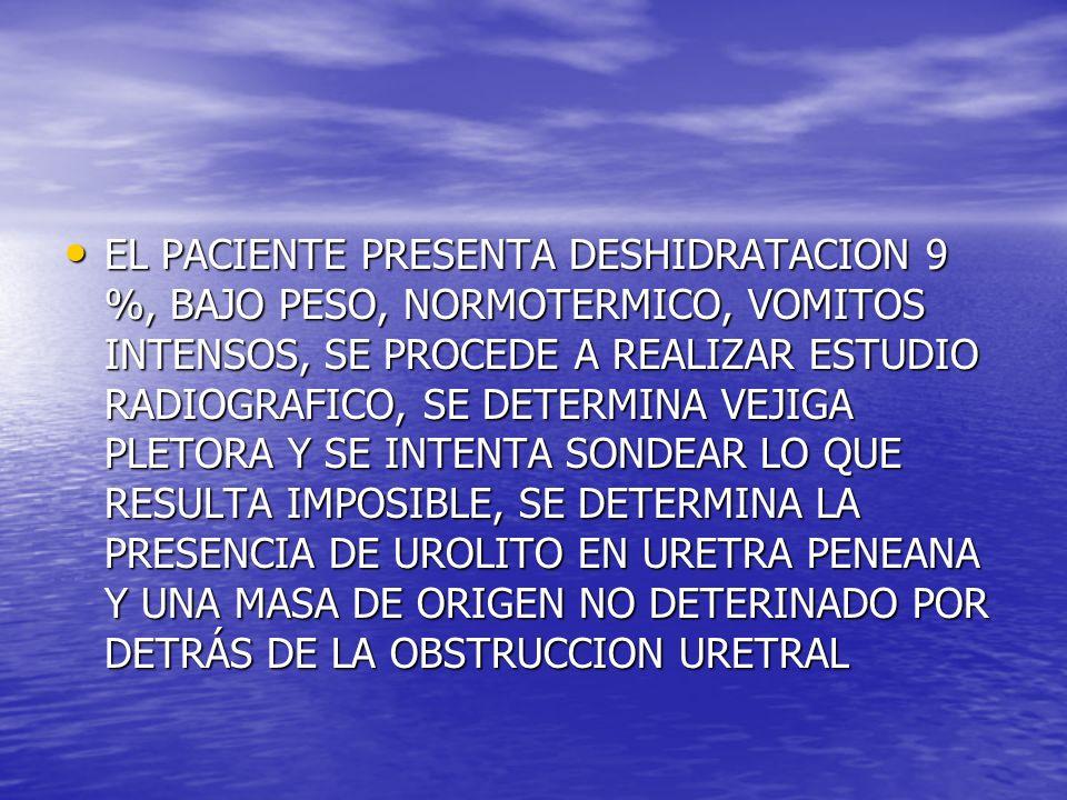 EL PACIENTE PRESENTA DESHIDRATACION 9 %, BAJO PESO, NORMOTERMICO, VOMITOS INTENSOS, SE PROCEDE A REALIZAR ESTUDIO RADIOGRAFICO, SE DETERMINA VEJIGA PLETORA Y SE INTENTA SONDEAR LO QUE RESULTA IMPOSIBLE, SE DETERMINA LA PRESENCIA DE UROLITO EN URETRA PENEANA Y UNA MASA DE ORIGEN NO DETERINADO POR DETRÁS DE LA OBSTRUCCION URETRAL EL PACIENTE PRESENTA DESHIDRATACION 9 %, BAJO PESO, NORMOTERMICO, VOMITOS INTENSOS, SE PROCEDE A REALIZAR ESTUDIO RADIOGRAFICO, SE DETERMINA VEJIGA PLETORA Y SE INTENTA SONDEAR LO QUE RESULTA IMPOSIBLE, SE DETERMINA LA PRESENCIA DE UROLITO EN URETRA PENEANA Y UNA MASA DE ORIGEN NO DETERINADO POR DETRÁS DE LA OBSTRUCCION URETRAL