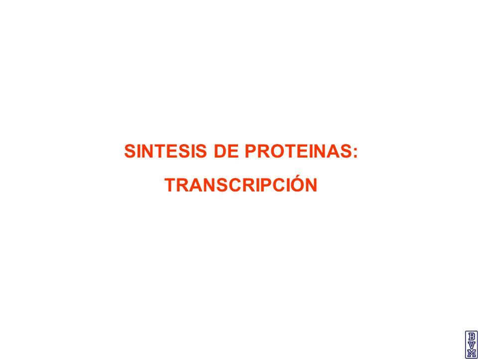 SINTESIS DE PROTEINAS: TRANSCRIPCIÓN