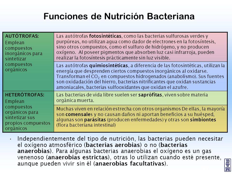 20 Funciones de Nutrición Bacteriana Independientemente del tipo de nutrición, las bacterias pueden necesitar el oxígeno atmosférico (bacterias aerobi