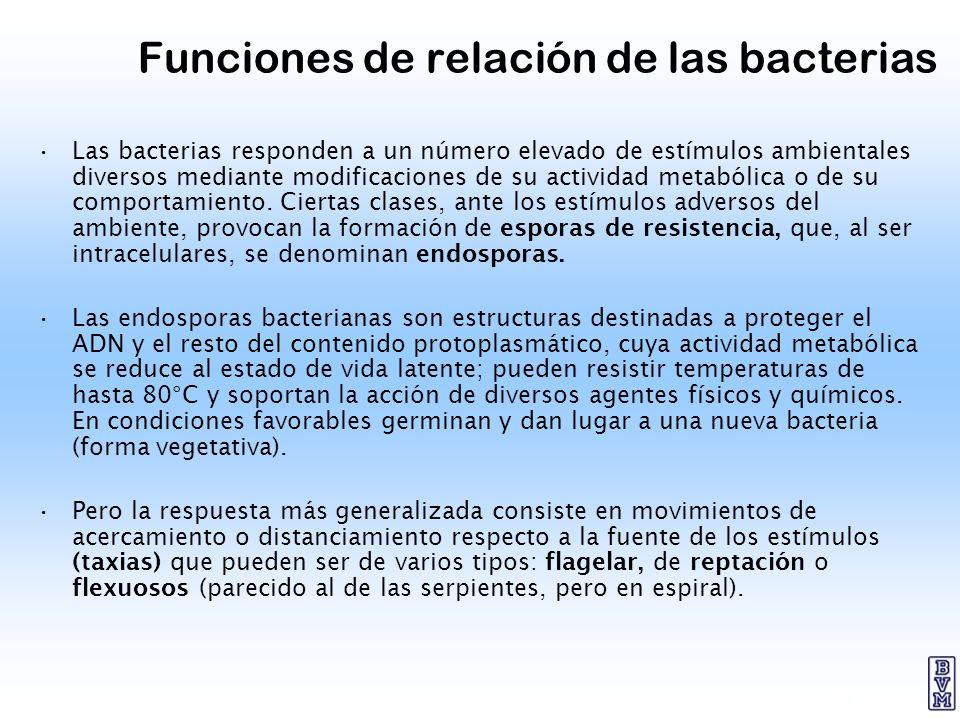 21 Funciones de relación de las bacterias Las bacterias responden a un número elevado de estímulos ambientales diversos mediante modificaciones de su
