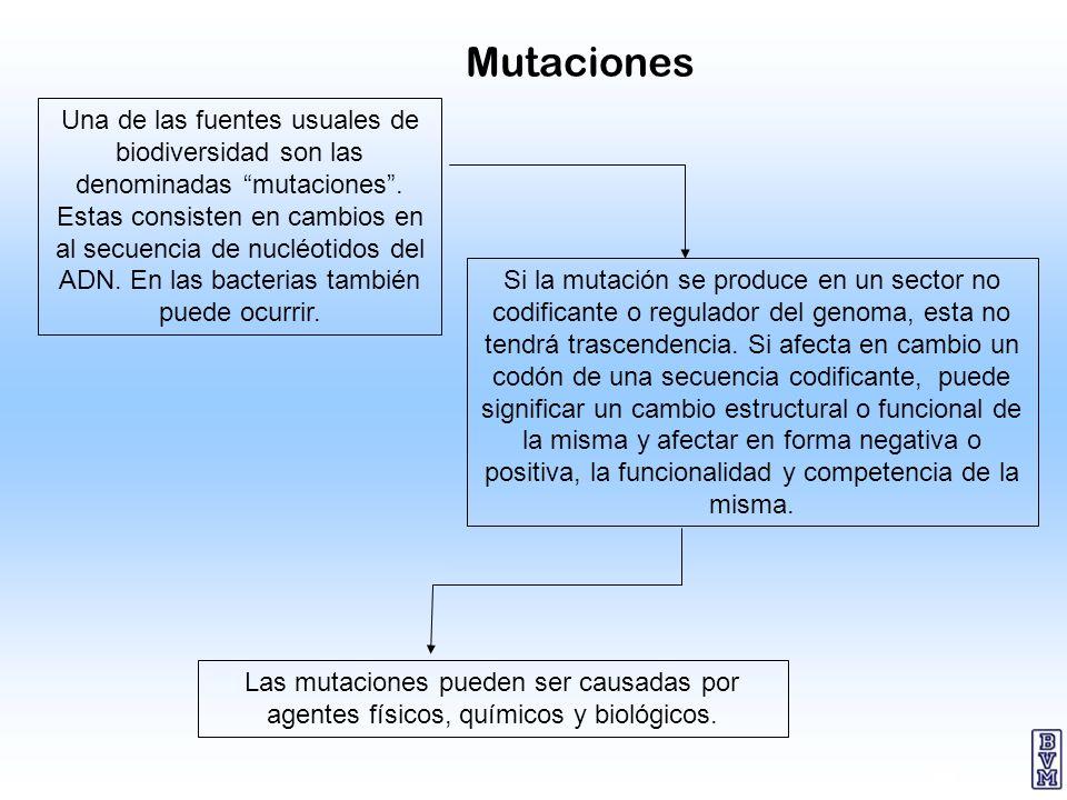 28 Una de las fuentes usuales de biodiversidad son las denominadas mutaciones. Estas consisten en cambios en al secuencia de nucléotidos del ADN. En l