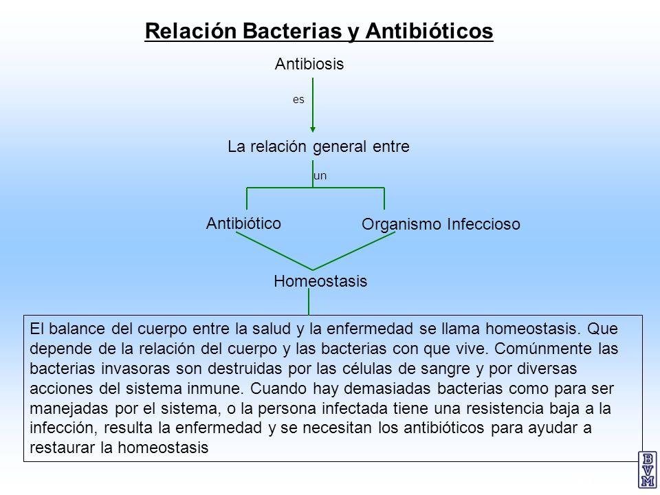 30 Relación Bacterias y Antibióticos El balance del cuerpo entre la salud y la enfermedad se llama homeostasis. Que depende de la relación del cuerpo