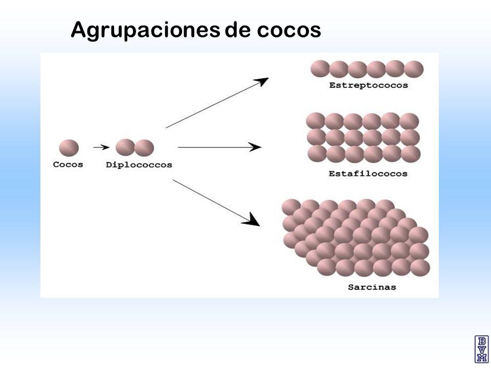 8 Agrupaciones de cocos