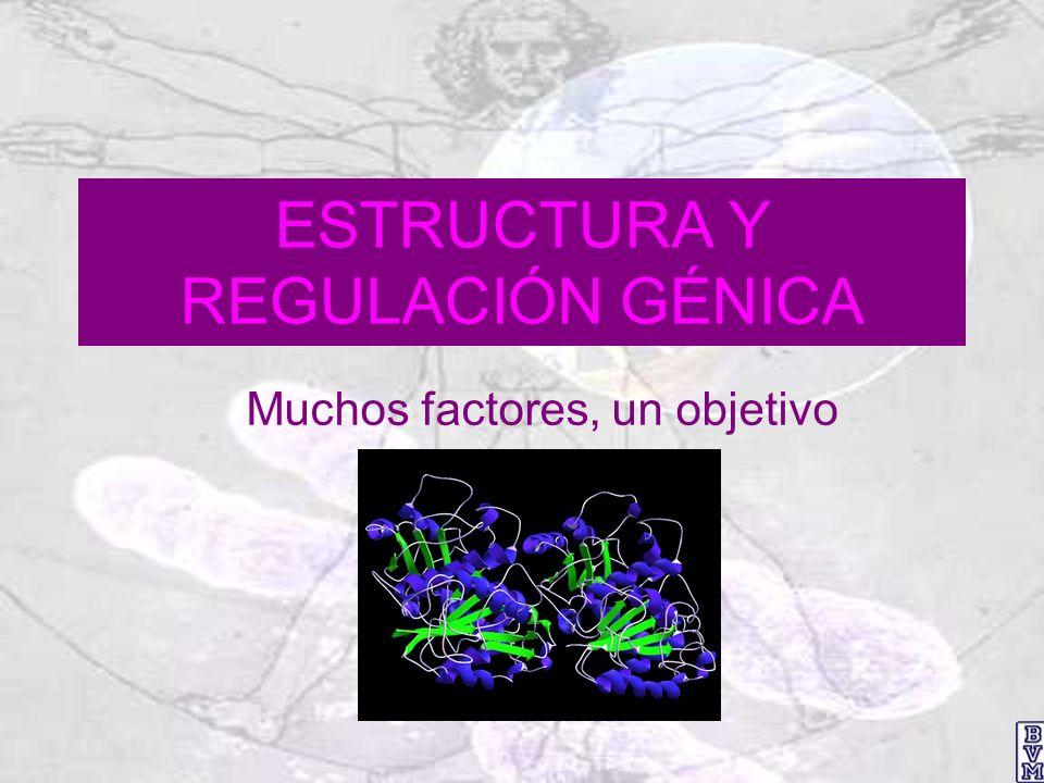 Estructura génica