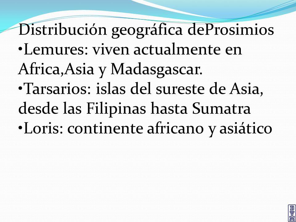 Distribución geográfica deProsimios Lemures: viven actualmente en Africa,Asia y Madasgascar. Tarsarios: islas del sureste de Asia, desde las Filipinas