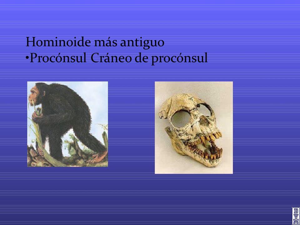 Hominoide más antiguo Procónsul Cráneo de procónsul