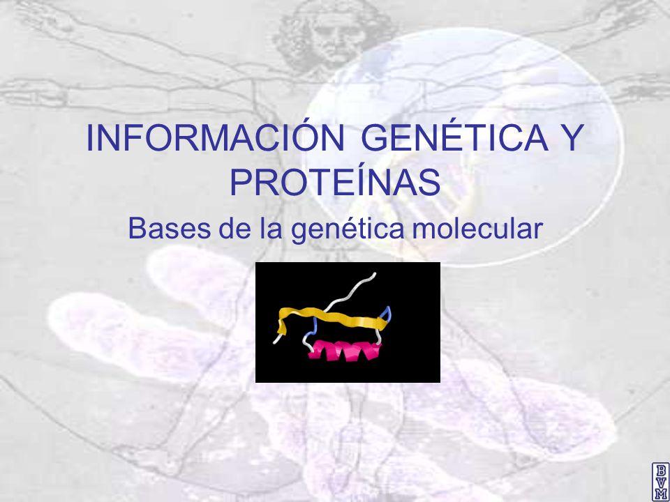 INFORMACIÓN GENÉTICA Y PROTEÍNAS Bases de la genética molecular