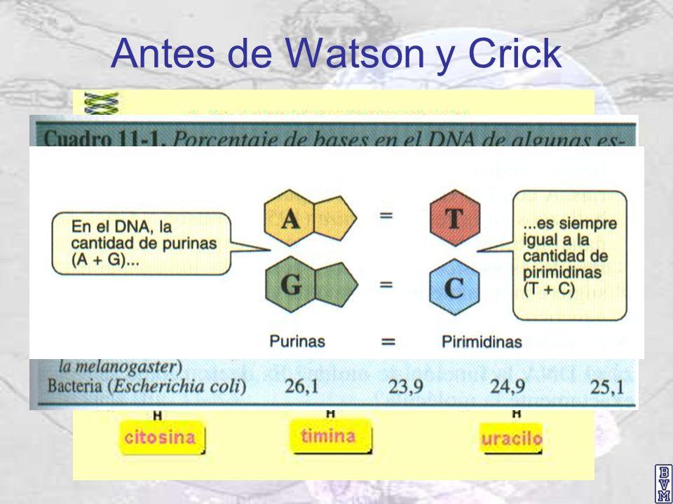 Antes de Watson y Crick