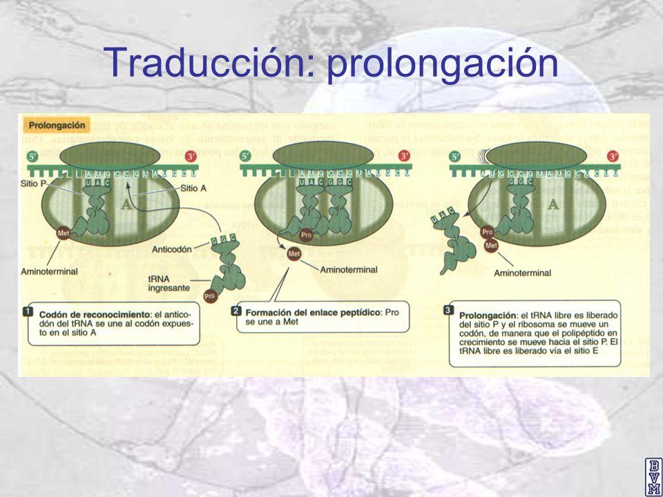Traducción: prolongación