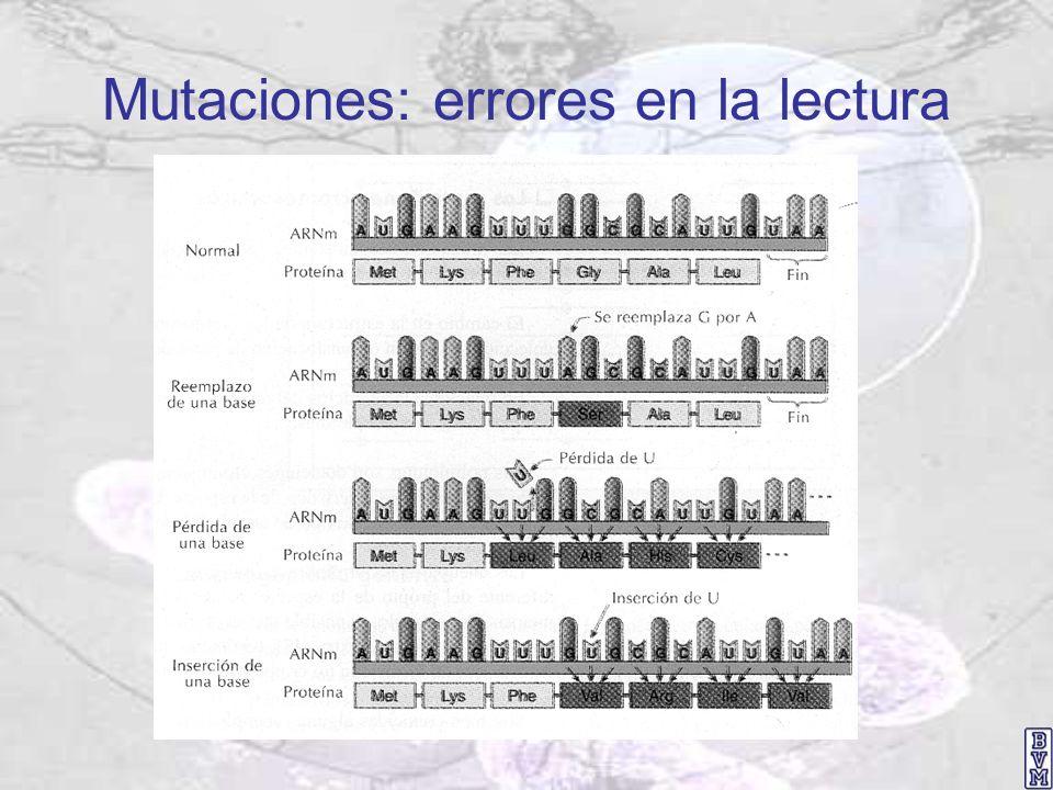 Mutaciones: errores en la lectura