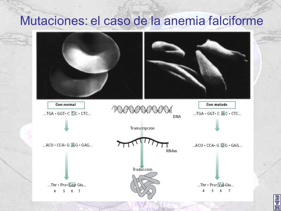 Mutaciones: el caso de la anemia falciforme