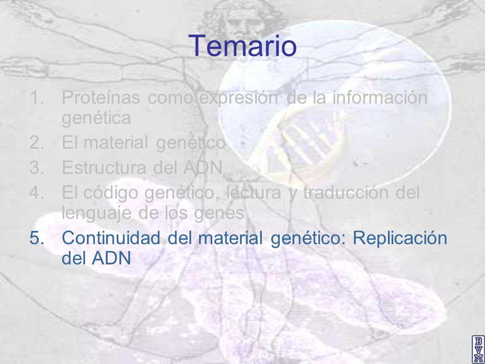 Temario 1.Proteínas como expresión de la información genética 2.El material genético 3.Estructura del ADN 4.El código genético, lectura y traducción d