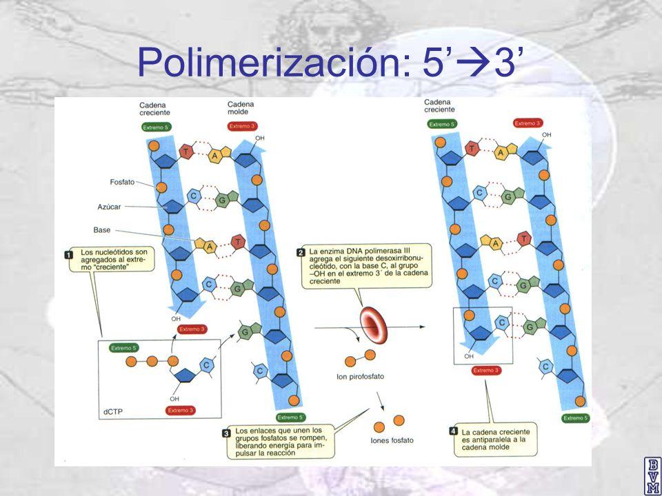 Polimerización: 5 3