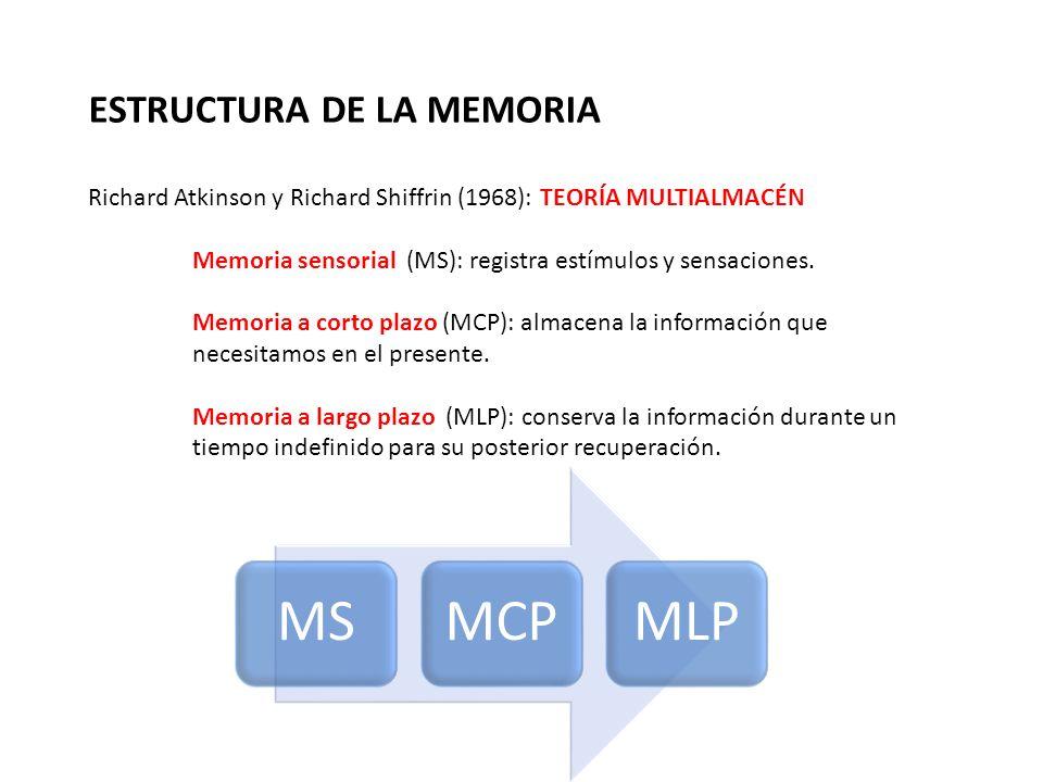 ESTRUCTURA DE LA MEMORIA Richard Atkinson y Richard Shiffrin (1968): TEORÍA MULTIALMACÉN Memoria sensorial (MS): registra estímulos y sensaciones. Mem