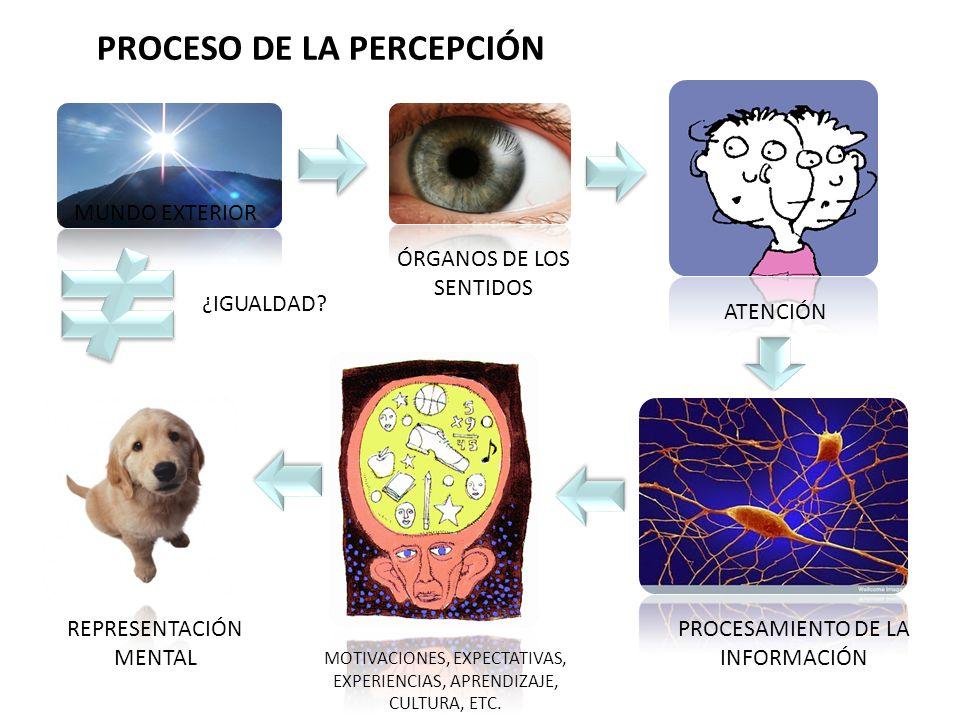 PROCESO DE LA PERCEPCIÓN MUNDO EXTERIOR ÓRGANOS DE LOS SENTIDOS ATENCIÓN PROCESAMIENTO DE LA INFORMACIÓN MOTIVACIONES, EXPECTATIVAS, EXPERIENCIAS, APR