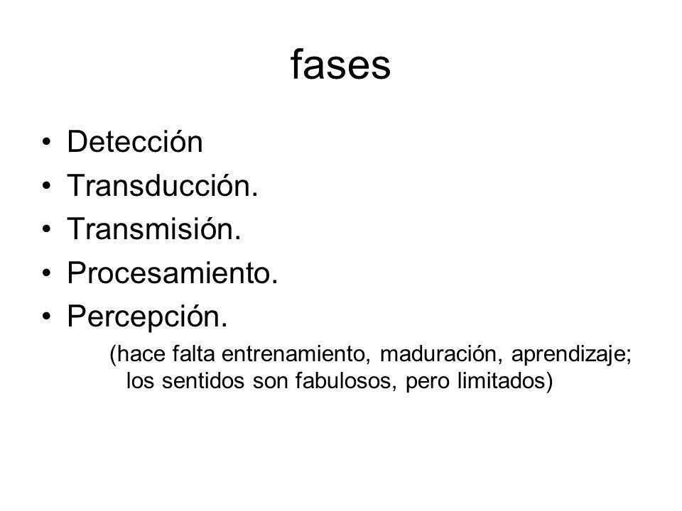 fases Detección Transducción. Transmisión. Procesamiento. Percepción. (hace falta entrenamiento, maduración, aprendizaje; los sentidos son fabulosos,