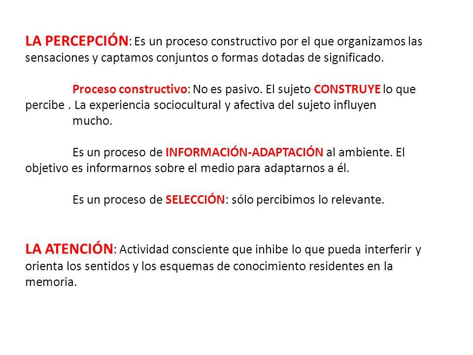 PROCESO DE LA PERCEPCIÓN MUNDO EXTERIOR ÓRGANOS DE LOS SENTIDOS ATENCIÓN PROCESAMIENTO DE LA INFORMACIÓN MOTIVACIONES, EXPECTATIVAS, EXPERIENCIAS, APRENDIZAJE, CULTURA, ETC.