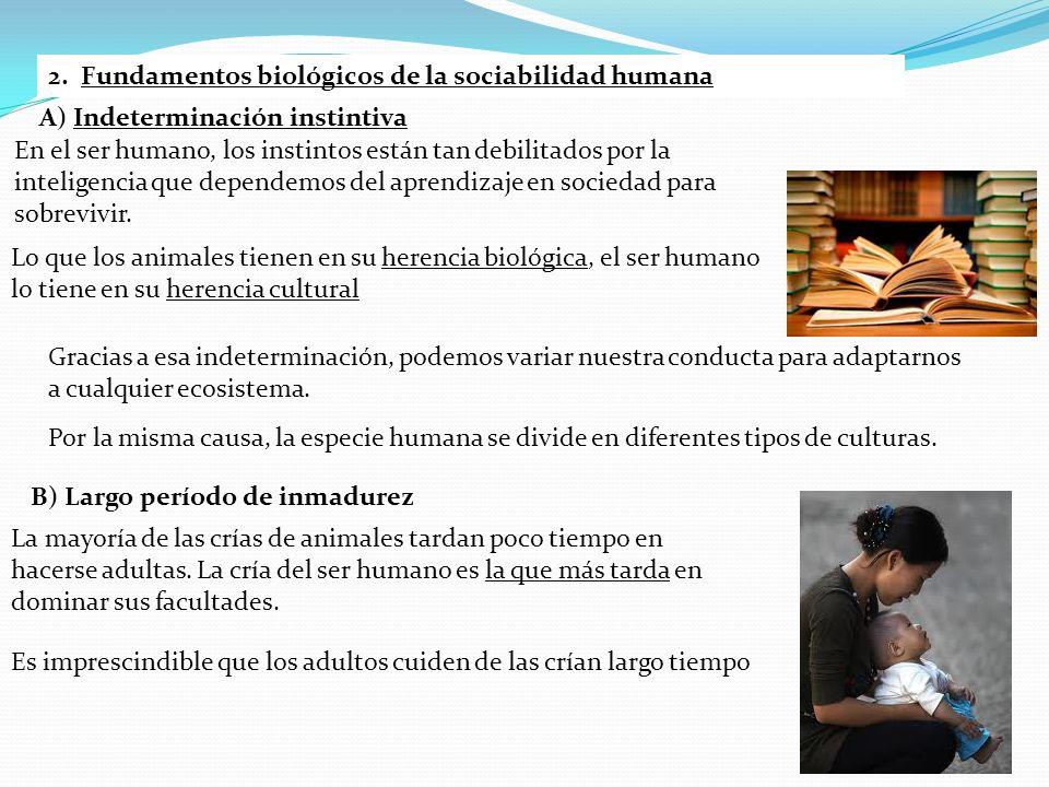 2. Fundamentos biológicos de la sociabilidad humana A) Indeterminación instintiva En el ser humano, los instintos están tan debilitados por la intelig