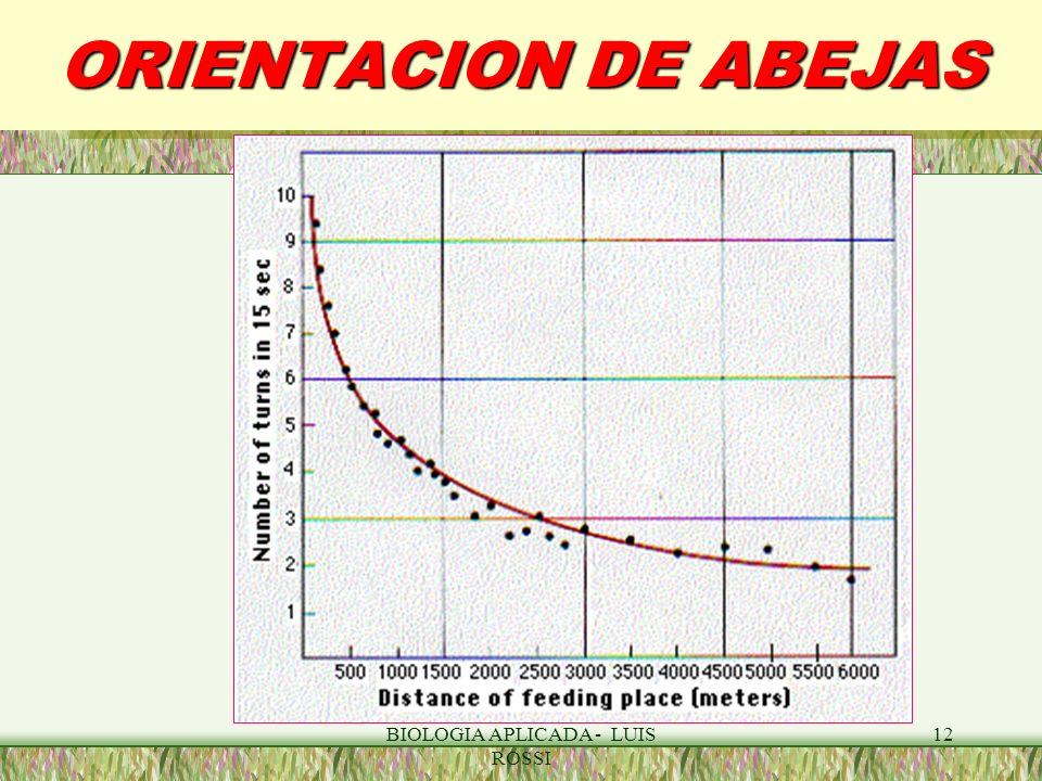 BIOLOGIA APLICADA - LUIS ROSSI 12 ORIENTACION DE ABEJAS